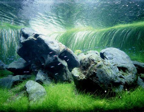 Takashi Amano Aquascape by Nature Aquariums From Takashi Amano Home Design And Interior