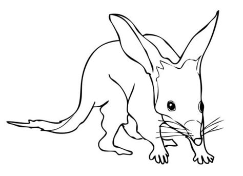 bilby coloring page  printable coloring pages