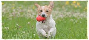 the dog house daycare dog walking pet sitting home With the dog house daycare