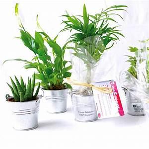 Offrir Plante Dpolluante De Bureau En Pot Zinc Objet