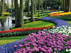 best place to order flowers online tulip fields lisse netherlands