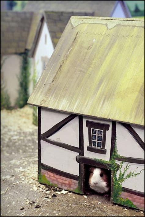 guinea pig fairy tale village esque wooden house guinea