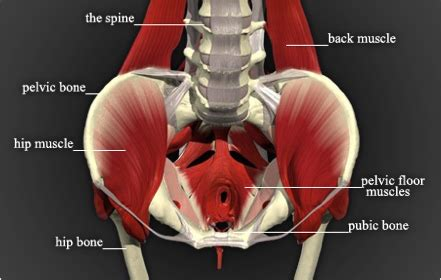 high tone pelvic floor dysfunction physicaltherapy html