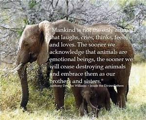 Animal Compassion Quotes. QuotesGram