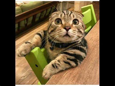 funny cats  compilation fails