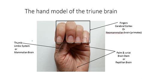 trauma   triune brain post traumatic stress disorder