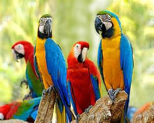 Bird Macaw Parrots