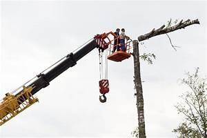 Abattage D Arbres Autorisation : abattage d 39 arbre l gislation quelles sont vos ~ Premium-room.com Idées de Décoration