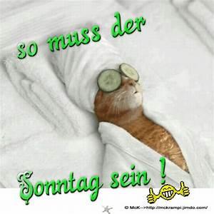 Lustige Bilder Sonntag : sonntag coole spr che pinterest katzen katzen bilder und lustige katzen ~ Frokenaadalensverden.com Haus und Dekorationen