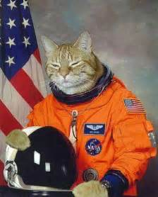 cat astronaut by smuckers totalcatmove