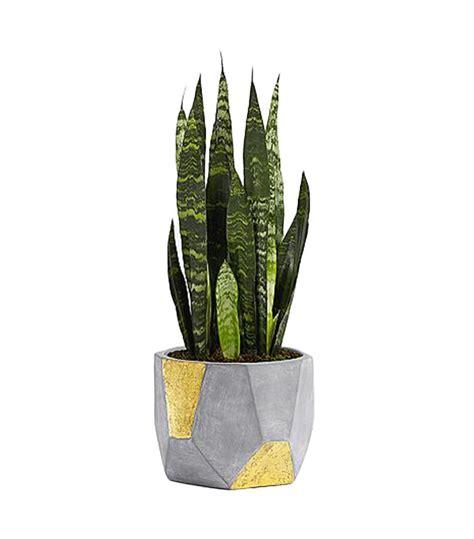 feng shui plants   clear  air mydomaine