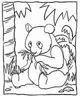Coloring Panda Bamboo Eating Sheet Mitraland sketch template