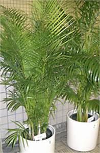 Pflanzen Luftreinigung Schlafzimmer : zimmerpflanzen als luftfilter und klimaanlage ~ Eleganceandgraceweddings.com Haus und Dekorationen