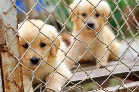 10 reasons to adopt a shelter pet