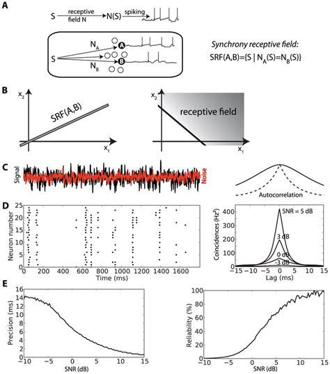 Synchrony mechanism with sensory stimuli. A, Schematic representation...   Download Scientific ...