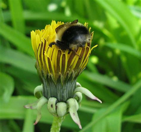 Someone Noticed How Cute Bumblebee Butts Are, And Now We ...