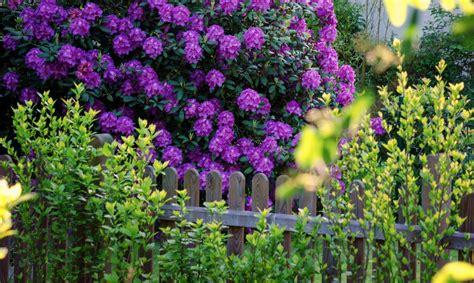 Sichtschutz Garten Tips by Ideen Und Tipps F 252 R Sichtschutz Im Garten