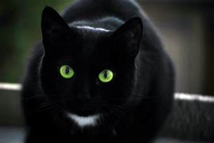 black cats with green featherclan sign up high open