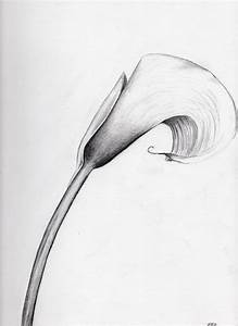Calla Lily by o0StarrieSkye0o on DeviantArt
