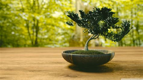 bonsai ultra hd desktop background wallpaper   uhd tv