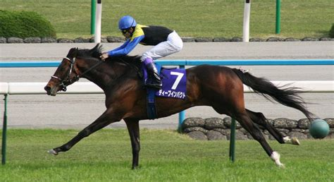 deep impact racehorses horse japanese win racehorse champion racing races triple crown years marked