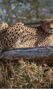 Cincinnati Zoo 3-30-16-1667 | Cincinnati zoo, Animals, Zoo