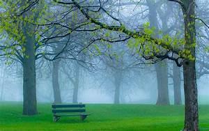 Park, Wallpaper, Foggy