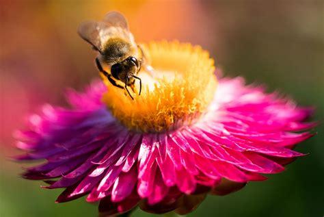 Bienenfreundliche Pflanzen  Der Biene Etwas Gutes Tun
