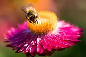 Was Tun Mit Pflanzen Im Urlaub : bienenfreundliche pflanzen der biene etwas gutes tun plant happy ~ Markanthonyermac.com Haus und Dekorationen