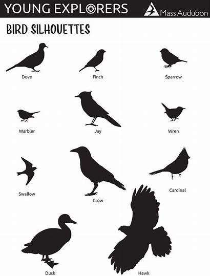 Bird Silhouettes Sheet Cheat Number Silhouette Birds