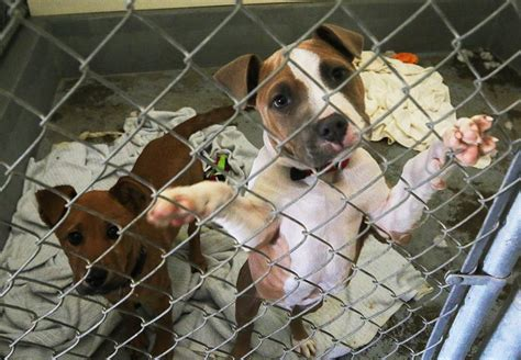 pet abandonment  kings county local hanfordsentinelcom