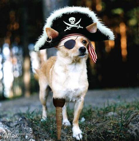 pirate tony werman flickr