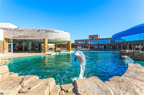 A Swimming Pool Fit For A Dolphin Pool & Spa News