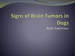Signs of Brain Tumors in Dogs