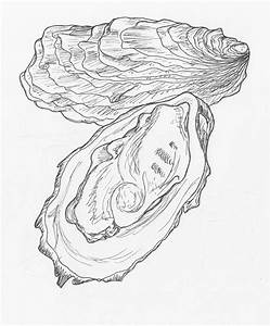 Oyster | Life in Pen and Ink