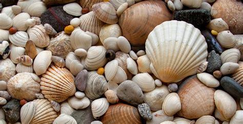 chambre insolite le saviez vous 20 pourquoi entend on la mer dans les