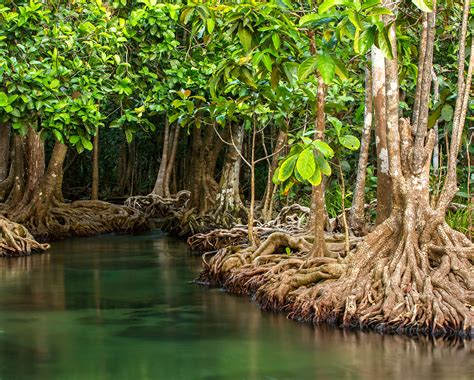 Environmentalists outraged as protected Florida mangroves