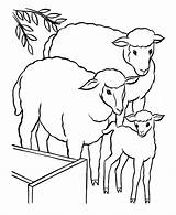 Sheep Coloring Pages Printable Books Animal Lamb Sheets Education sketch template