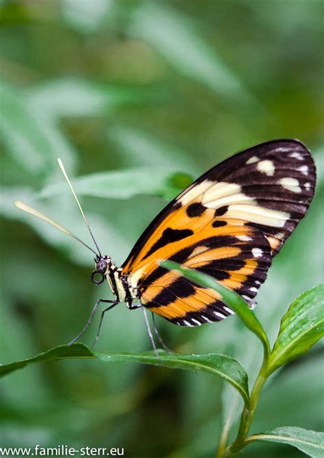 Botanischer Garten Schmetterlinge öffnungszeiten by Schmetterlingsausstellung Im Botanischen Garten M 252 Nchen