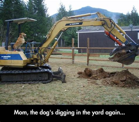 mom  dog  laughworthy funny dog