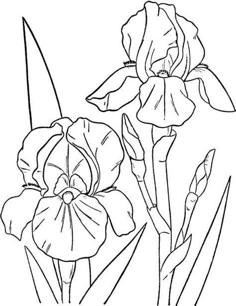 Druivenrank Kleurplaat by Flowers Images Coloring Pages And Children