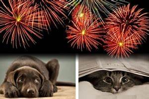 PETS AND FIREWORKS: HANDLING PET ANXIETY ON THE 4TH OF JULY