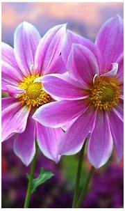 Beautiful Colorful Flowers Wallpaper - WallpaperSafari