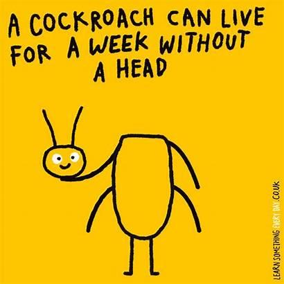 Cockroach Giphy Meme Dancing Roach Something Learn