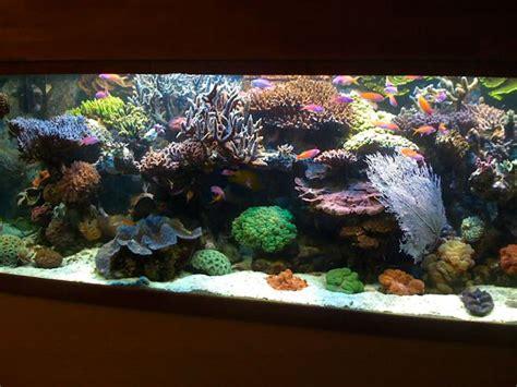 ecosystem miracle mud refugium mineral  corals