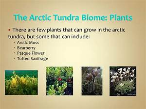 North American Biomes Made By Lauren Shepard Ppt Video