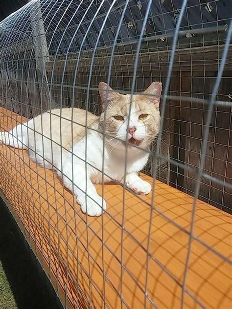 outdoor cat jungle gym outdoor cat enclosure cat