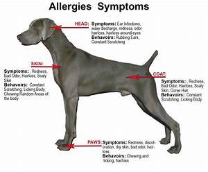 Good dog health and symptoms dog care information dog for Dog food allergy symptoms