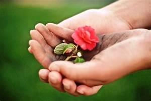 Pflege Von Zimmerpflanzen : vermehrung pflege von zimmerpflanzen zimmerpflanzen zimmer und gartenblumen ~ Markanthonyermac.com Haus und Dekorationen