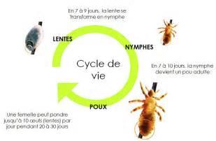 Duree De Vie D Un Poux by Laboratoire Marque Verte Dossier Poux Et Lentes Comment